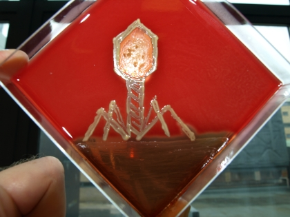 phage..